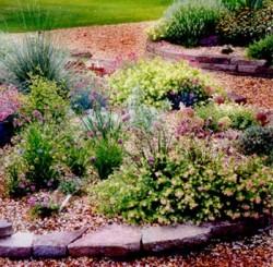 Выбор садовых растений