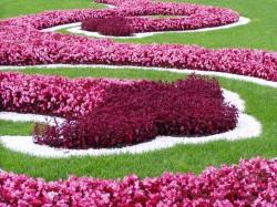 Выбор цветов для клумб и цветников