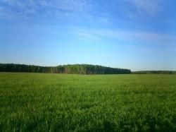 Продажа земли в Подмосковье всегда актуальна