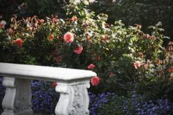 Королевское место в вашем саду