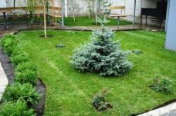 Советы по озеленению участка