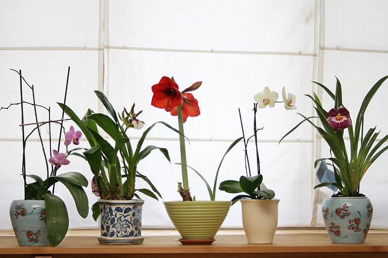 Цветы в интерьере размещение