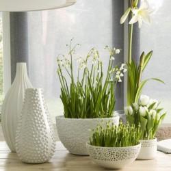 Комнатные растения в домашнем интерьере