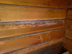 Средства защиты бруса и бревен от грибков и насекомых