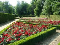 Несколько советов по созданию розария