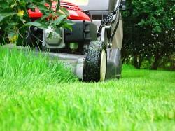 Триммеры – презентабельный вид газонов целиком зависит от них