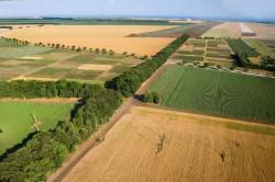 Покупка земельного участка: поле или лес?