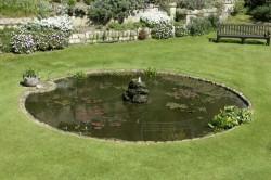 Определение места и уход за водоемами в саду