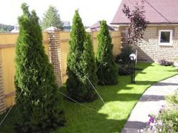 Придомовый участок: какие посадить деревья?