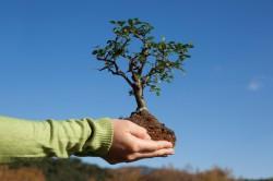 Как ухаживать за деревьями и садом?