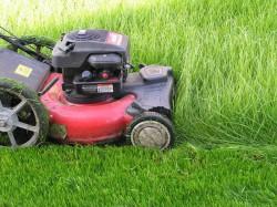 Инструкция по выбору газонокосилки